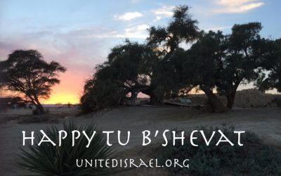 Happy New Year – For Trees!